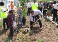 Mayor plants 'Toyon', the City's Official Native Plant